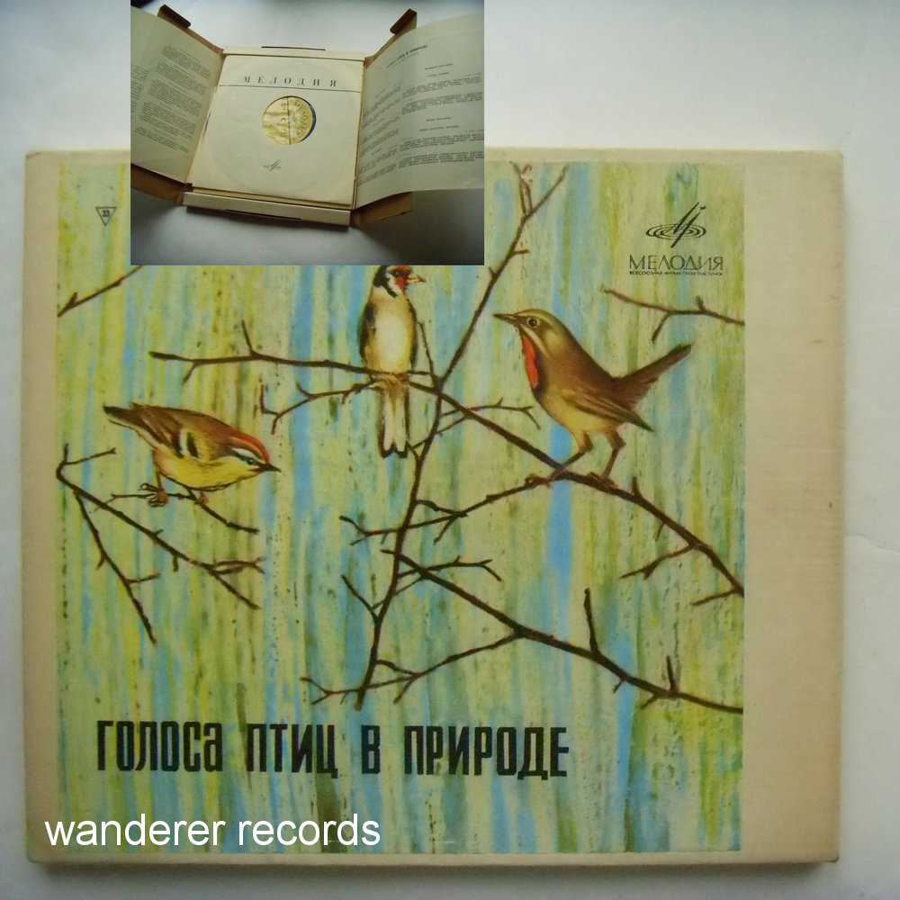 Birds of USSR European part, Siberia, Far East - Voices of birds in nature 5x10 inch